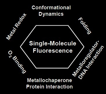 contribution to chem Erwin schrödinger quantum numbers (erwin schrödinger) a powerful model of the atom was developed by erwin schrödinger in.